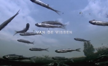 North Sea Film Festival: V.I.S.S.E.N.