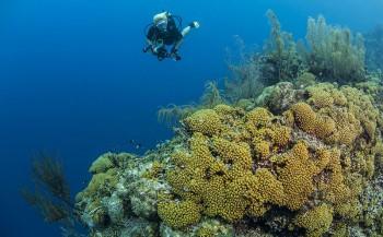 Curaçao - Tips voor duikers
