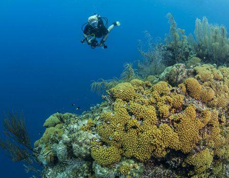 Rutger-Geerling-Curacao-_blog5_IMG_8936