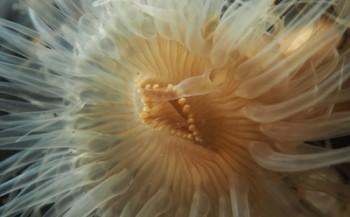 Tamara Lebesque-Franssen - Onderwater-fotowedstrijd