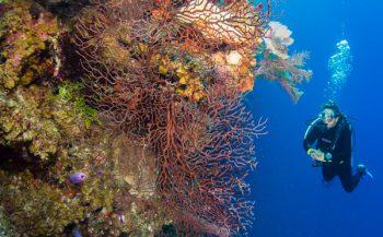 Snorkelen en duiken in Belize - wat wil je niet missen?