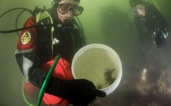 Ook Nederlands onderwaterleven op AquaHortus 2015