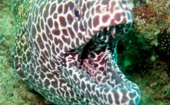 Saskia Uit den Bogaard - Safari boven én onder water in Kenia (6)