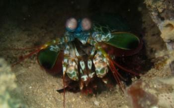 Saskia Uit den Bogaard - Safari boven én onder water in Kenia (7)
