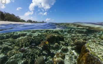 Koralen eten plastic