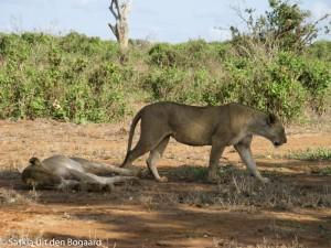 Safari_Souldivers__20_of_31_
