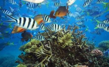 Internationale WNF-petitie voor dumpverbod bij Great Barrier Reef