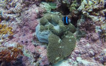Cindy Dalebout- De prachtige onderwaterwereld van de Filipijnen