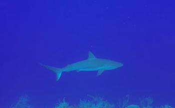 Jans van Wieren - Blue Hole Belize