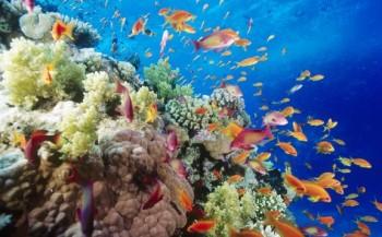 CoralGardening herstelt koralen in Thailand
