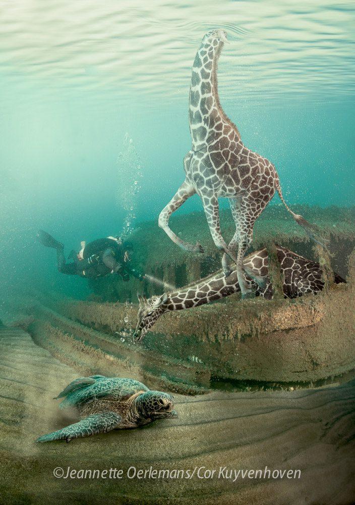 Giraffe in de Noordzee