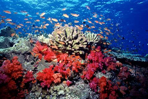 1Coral_-Fiji_-2-credits-WWF