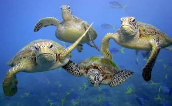 Leven in zee gehalveerd
