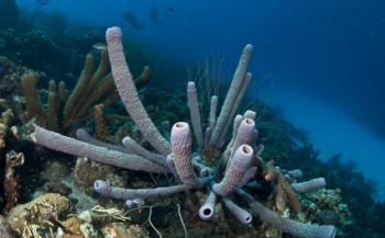 Bonaire zoekt balans