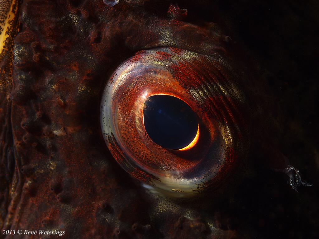 oog zeedonderpad