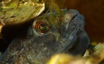 John Landa - Shootout aquashot Zeeland