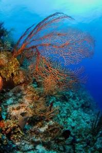 Belize_onderwater__12_