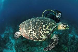 Belize_onderwater__17_