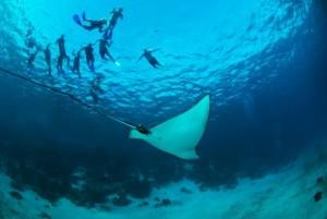 Belize_onderwater__18_