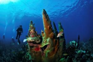 Belize_onderwater__19_