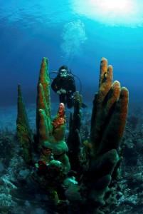 Belize_onderwater__23_