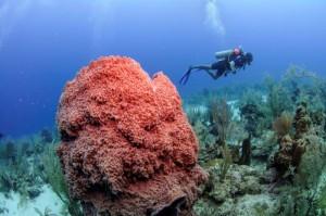 Belize_onderwater__2_