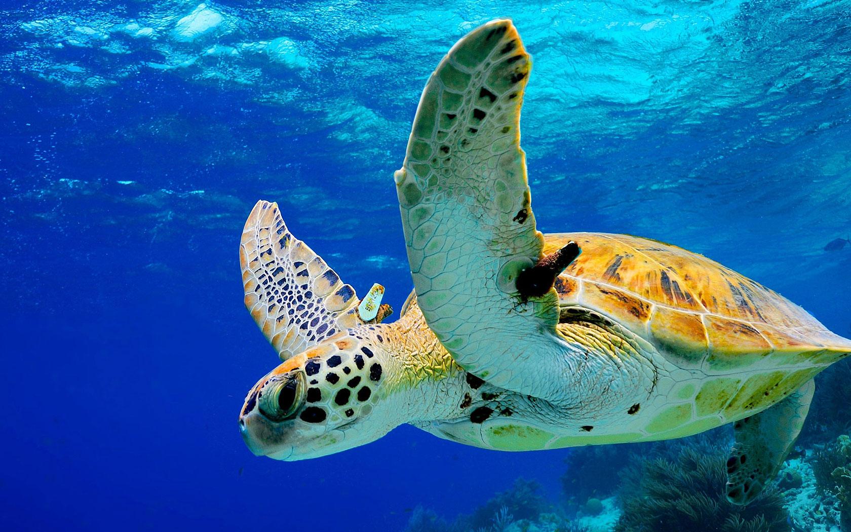 Bonaire_schildpad