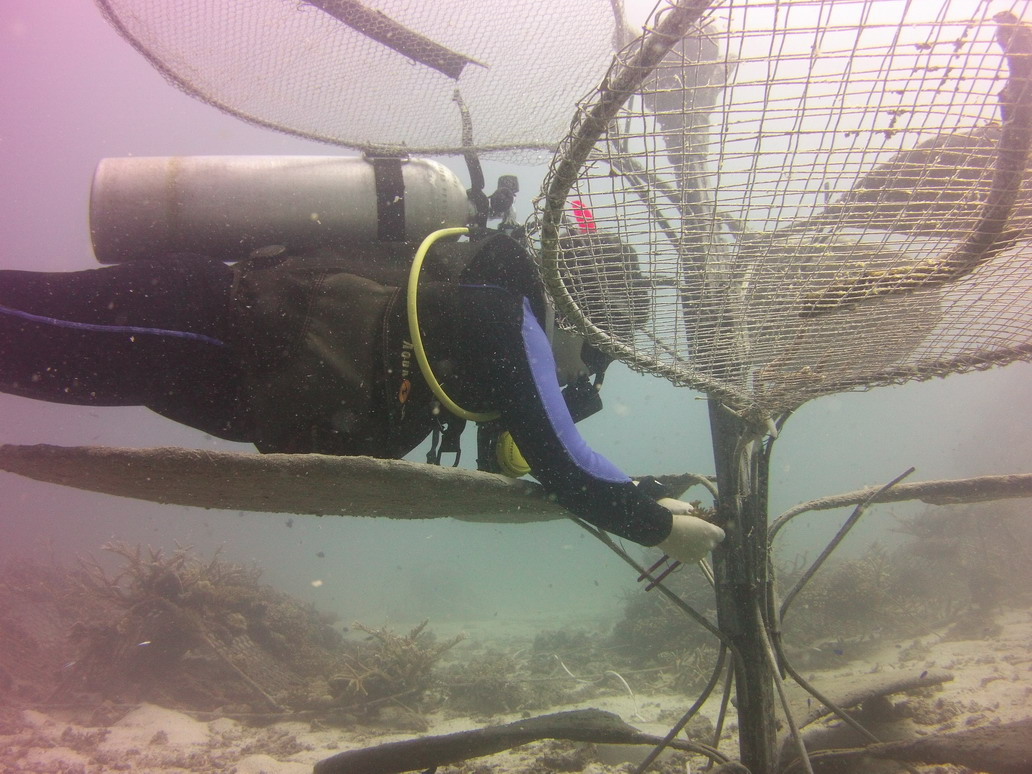 Coral Gardening_KLF-151020-288 - Koraal erop bevestigen