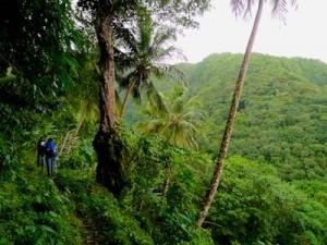 Dominica-afbeeldingen-overige_3