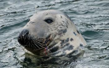 Gery Beeckmans - De zeehonden duiken met mij