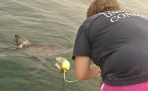 onderzoek-witte-haai