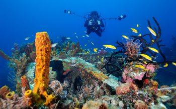 Negentig procent van roofvissen verdwenen van Caribische riffen