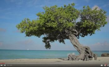Aruba in beeld