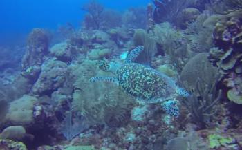 Bas Kulderij - Schildpadden en grote vissen gegarandeerd