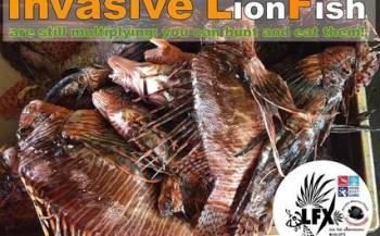 Antoinette Kolman- The lionfish