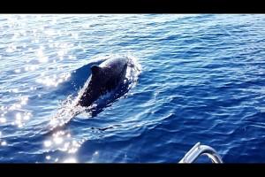 dolfijn_2_JPG_scaled1000