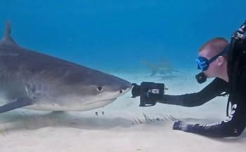 Korte film: Tijgerhaai 'eet' videocamera
