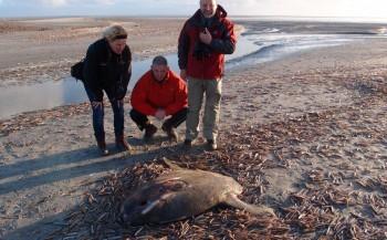 Bas van der Sanden - Maanvis op Ameland