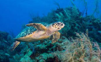 Stans van Hoek - Haaien en schildpadden op Bali