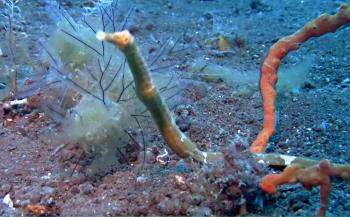 Tim de Haan - Duiken op Melasti en Bali Hai Reef