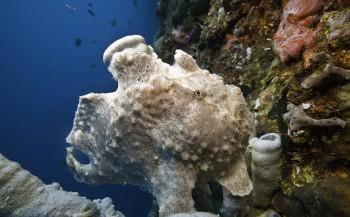 Magisch duiken in de Filippijnen