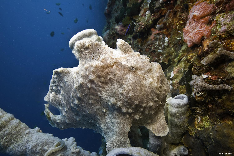 Magisch duiken in de Filippijnen – DuikeninBeeld