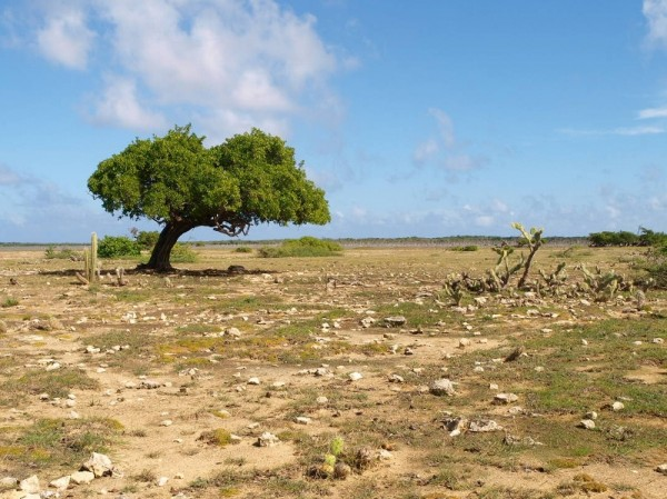 Bonaire_Edwin_blog4_1