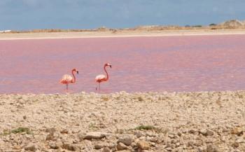 Natuur op Bonaire
