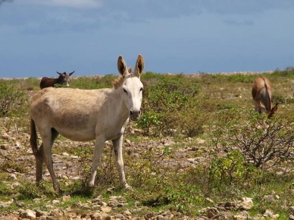 Bonaire_Edwin_blog4_3