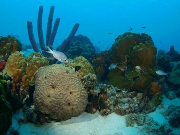 Bonaire_edwin_overzichtje-huisrif