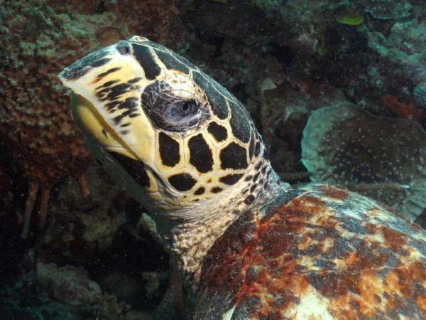 SealifeDC1000-schildpad2