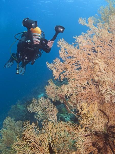 SealifeDC1000_koraalmetmode