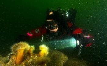 Stans van Hoek - Teamduik/mijn 1200ste duik