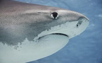 Naar de haaien